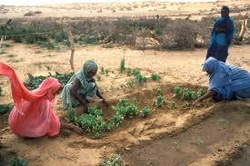 Sahel women